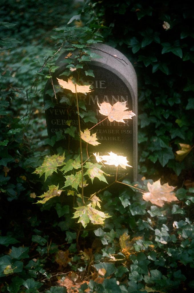 legendes-automne-tombe-000037210016-2-rd900.jpg